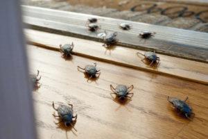 Roaches entering interior of home