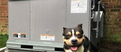 rescued dog and donated HVAC unit